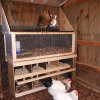 Why you should learn how to build a chicken coop